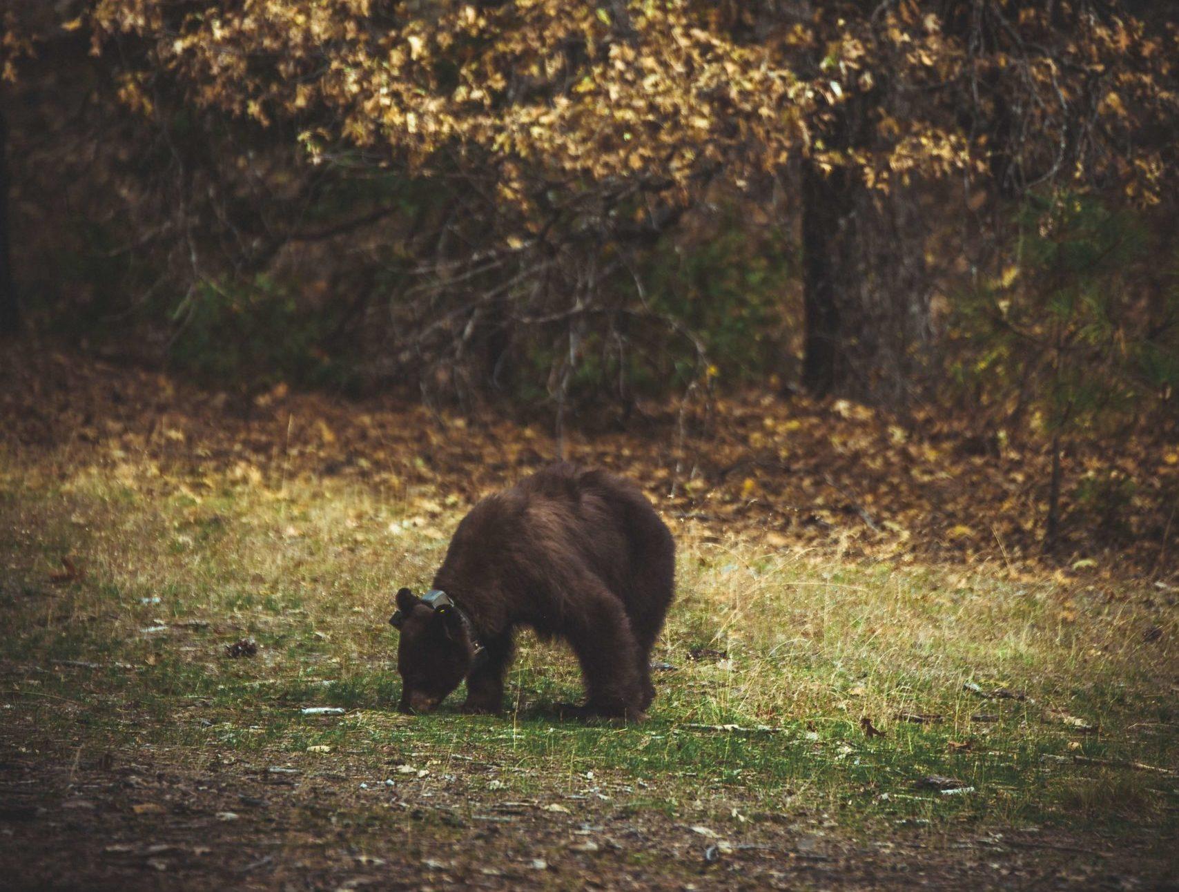 Yosemite National Park wildlife