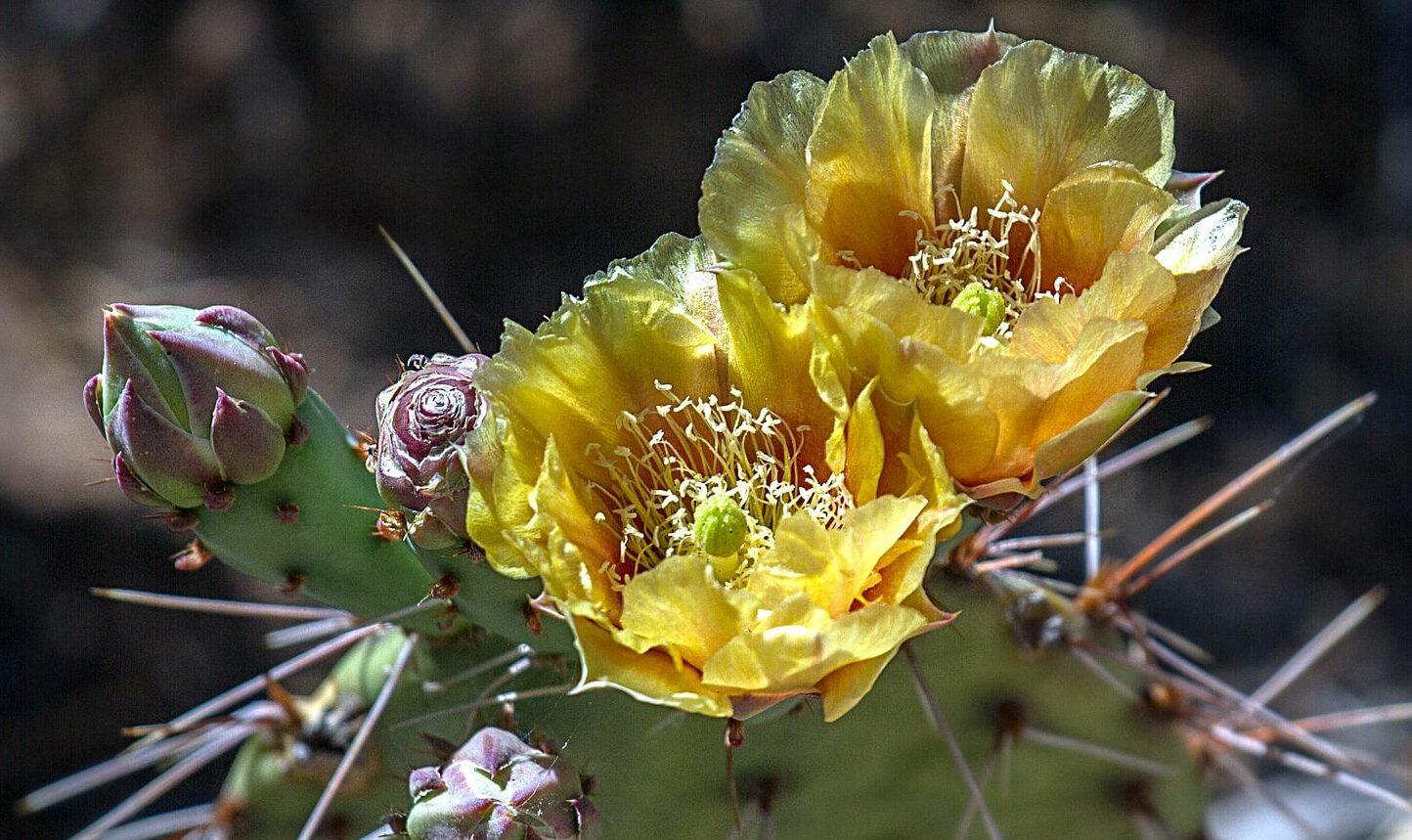 Grand Canyon National Park plant life