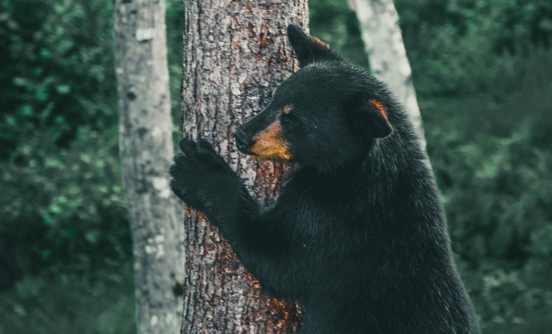 Great Smoky Mountains Wildlife