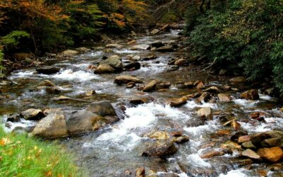 Fun Facts About Great Smoky Mountains National Park