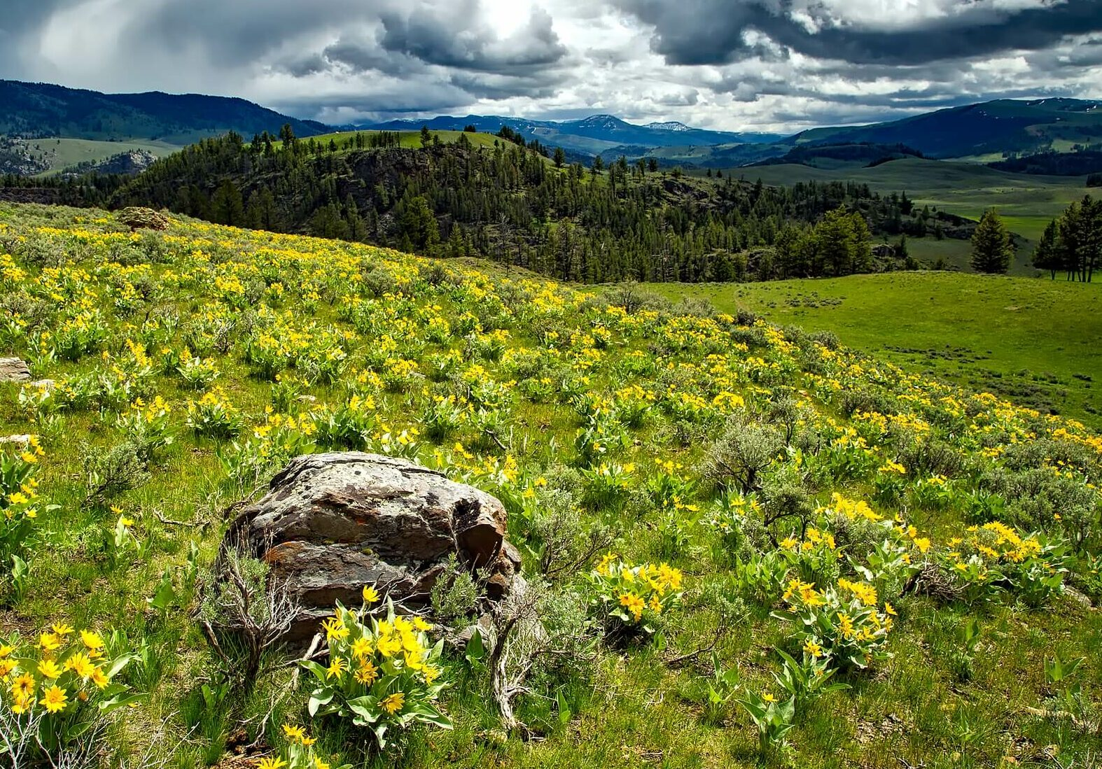 Yellowstone National Park plant life