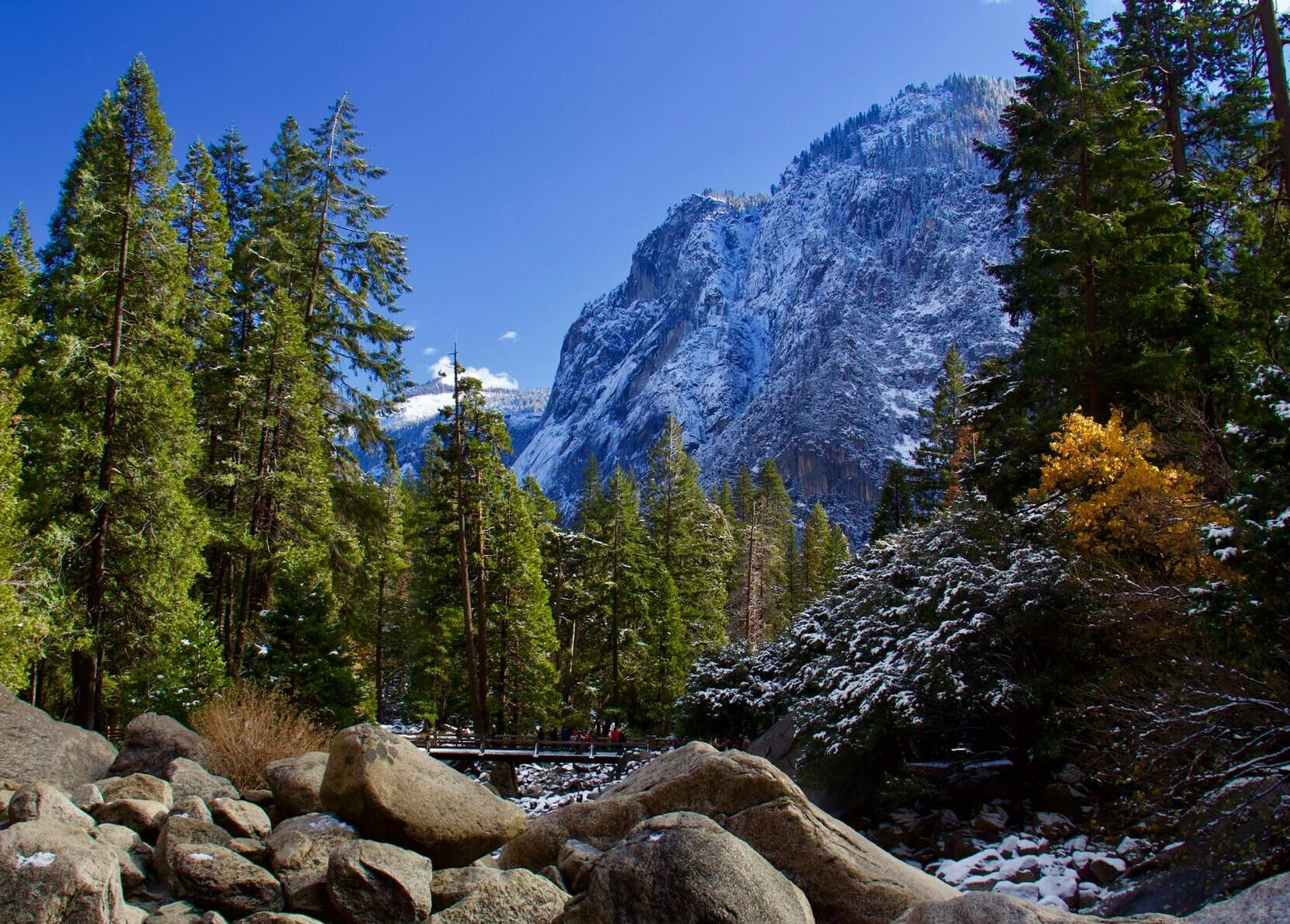 plant life of Yosemite National Park