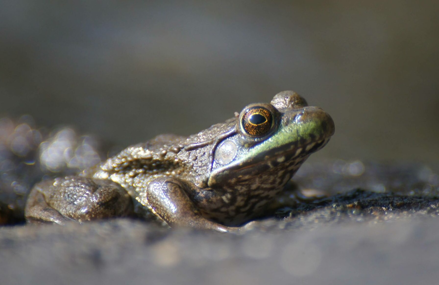 a frog in the dirt in Voyageurs National Park