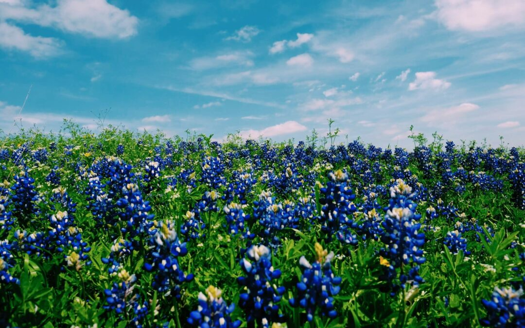 The Ultimate Guide To Camping In Texas